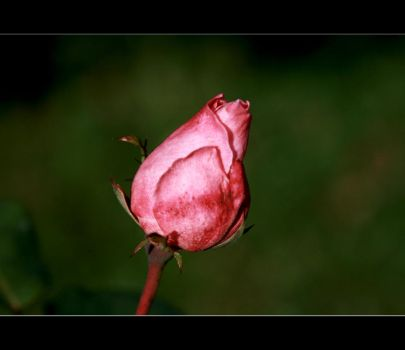yet another flower by xavierus