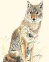 Coyotee-tee... by Artsy50