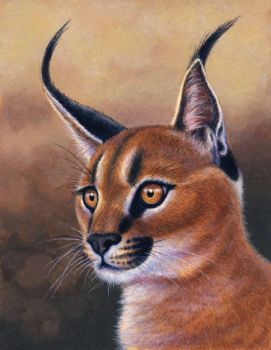 Caracal by WillemSvdMerwe