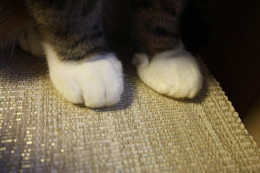 Paws by Rikanen