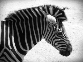 Stripes by evelynrosalia