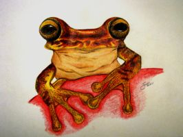 Froggiee by Narzaria