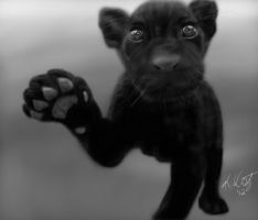 Baby Panther by KayZeSpy