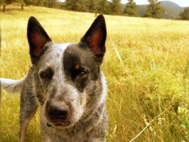 Dog In The Grass 2 by Sevian