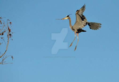 Flying To The Nest by Photography-by-Image