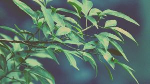 Green Leafs by RicheliVargas