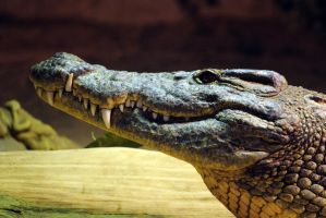 Nandi by 8TwilightAngel8