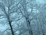 Snowy Trees by SimplyKristina