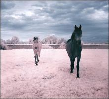 Horses Dream infrared... by MichiLauke