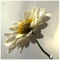 white flower by EatMyNose
