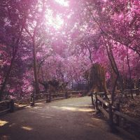 The land of pink leaves by kath660