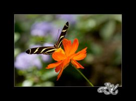 At the Zoo : Zebra Longwing by minainerz