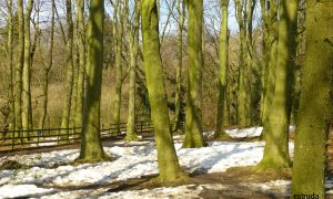The Green Trees by Estruda