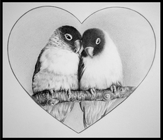 lovebirds by pitschke