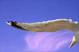 Wing of a Gull by j7ugg