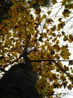 Autumn trees III. by Nicollaos