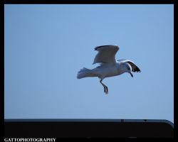Landing by Dominick-AR