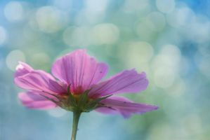 Cosmos by SarahharaS1
