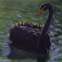 Black Swan by mbeckett