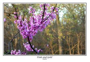 Pink and Gold by damphyr