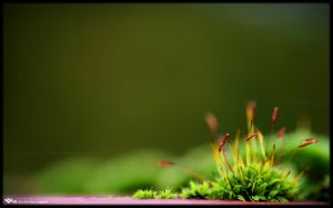 Mossy Wall I by l8