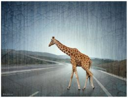 Lost Giraffe on the Highway by BenHeine