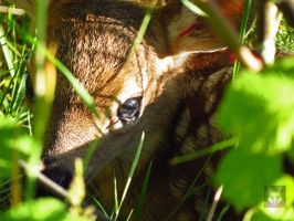 Hiding In The Grasses by wolfwings1