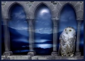 HOOT - ArwensGrace by scottish
