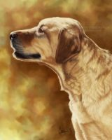 Golden Labrador Painting by Bezumiye