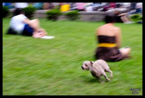 Running Dog by CharliePhotos