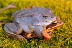 Amplexus by Dark-Raptor