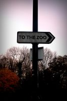 To the Zoo! by rayofsunshine333