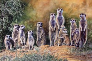 Meerkats 2 by WillemSvdMerwe