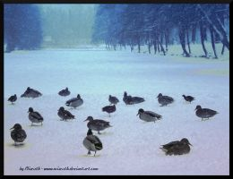 .:Ducks and Snow:. by Miarath