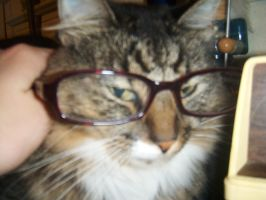 Mittens in Glasses XD by xmitters