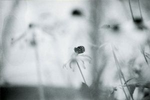 APFoB: Alone On A Flower by fax-celestis