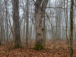Trunks in the Mist by thrikreed