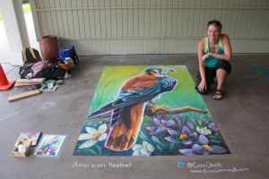 American Kestrel Chalk Art Full View by charfade