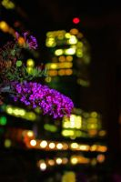 Purple in the night by chilotelul-vesel