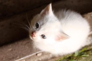 Little white kitty by Zi0oTo