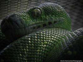 Watching Snake by martizzzle