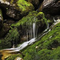 Mossy spring by photogrifos