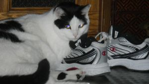 protecting His shoes by Music---Junky