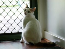 Kitty wants out by Mutilator-Of-Cookies
