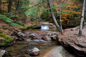 White Mountains  Fall Foliage  268 by FairieGoodMother