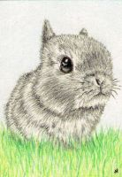 Bunny - ACEO by Sofera