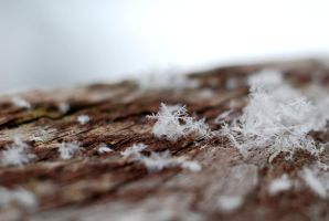 Snowflakes 1 by SmileyG