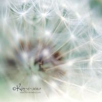 Prisms of dandelion by kim-e-sens