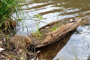 Log In The Water by A-Sped-Kid