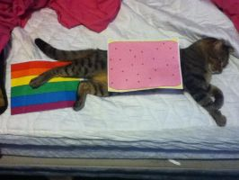 Real Nyan Cat o: by my-chemical-rachel